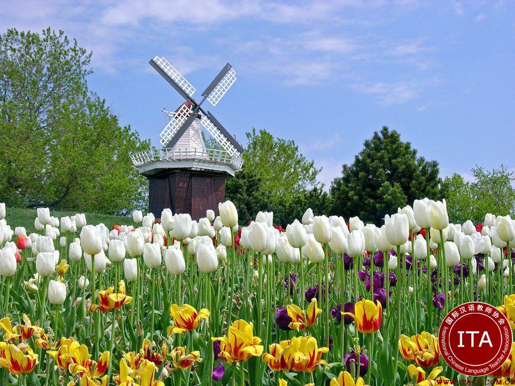 荷兰的风俗和禁忌是什么